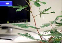 Motion-sensing shrubs and robo-Venus flytraps: Inside the world of Cyborg Botany