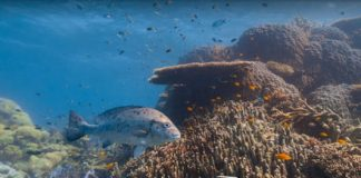Google showcases natural underwater beauty in new Street View images