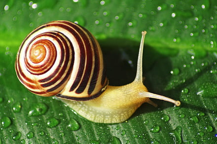 New snail-inspired super glue can switch between sticky and non-sticky states