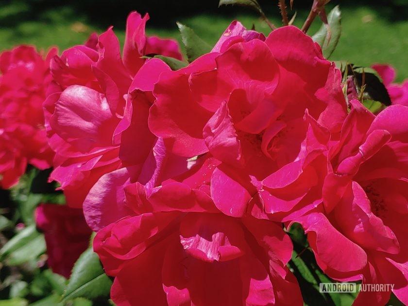 LG V50 ThinQ Review sample photo flower macro