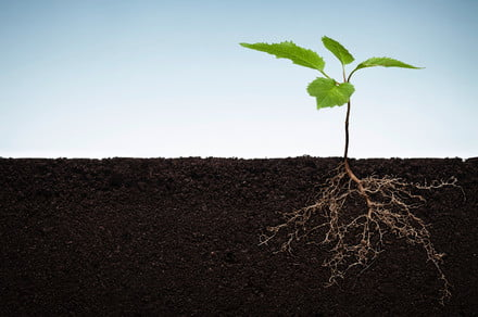 Genetically modified plants could help get to the root of climate change