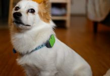 Whistle Go Explore impressions: A smarter pet tracker