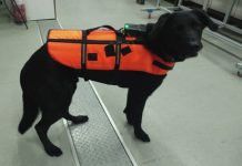 Clever new haptic vest could allow rescue dogs to take commands from miles away