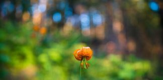 How to take bokeh photos: The beginner's guide to better blur