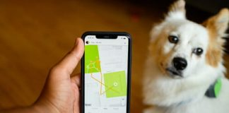 The best pet trackers for your furry friends