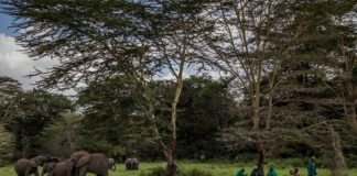 Apple Partners With Conservation International to Restore Grasslands and Forests in Kenya