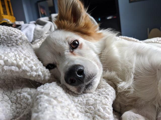 pixel 4 xl normal camera dog sleeping