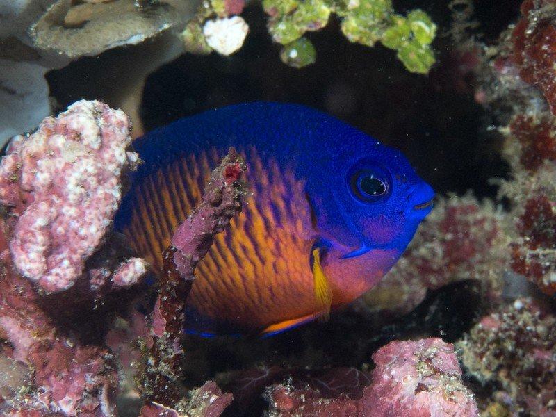 coral-beauty.jpg?itok=PNL3W2pv