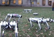 Watch MIT's Mini Cheetahs limber up for the robot apocalypse