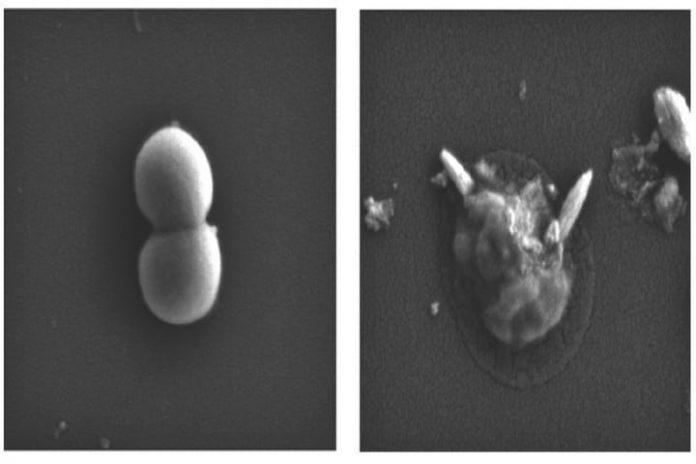 Liquid metal nanoparticles could tear apart superbugs like tiny Terminators