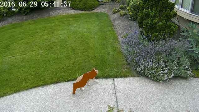 cat-detected.jpg?itok=x9ntyWAt