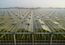 Semitransparent solar cells could power tomorrow's self-sustaining greenhouses