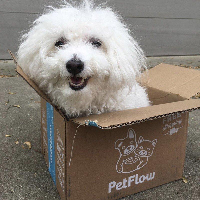 petflow.jpg?itok=UzYITjV8