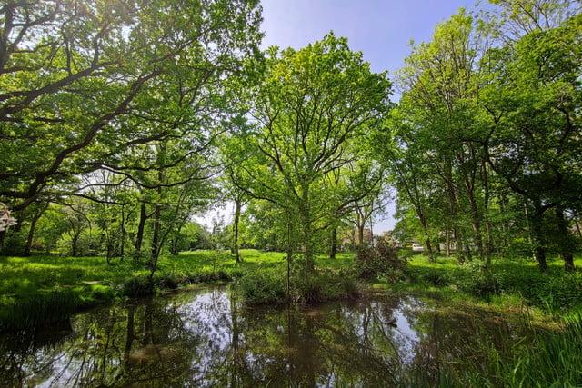 xiaomi mi 10 pro review trees