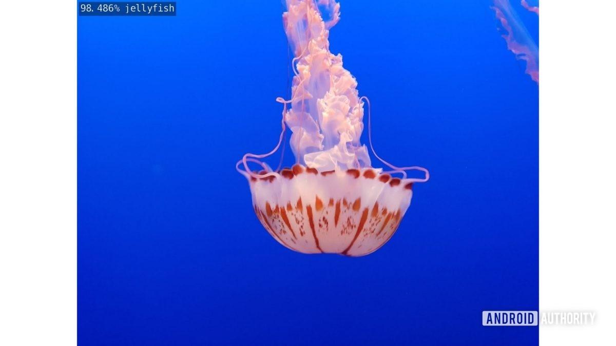 jellyfish photo gary took output