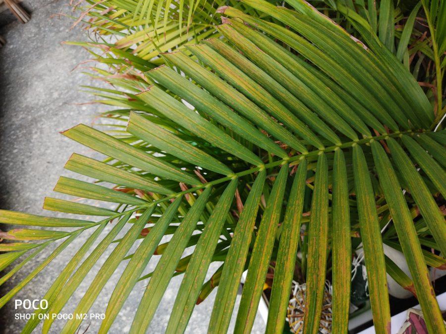 Poco M2 Pro image sample of leaf