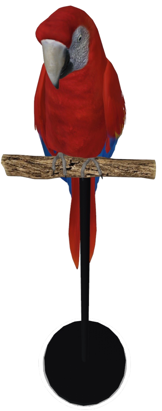 macaw-google-3d.png