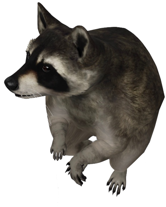 raccoon-google-3d.png