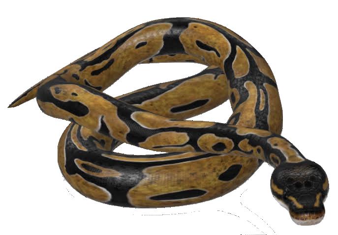 ball-python-google-3d.png