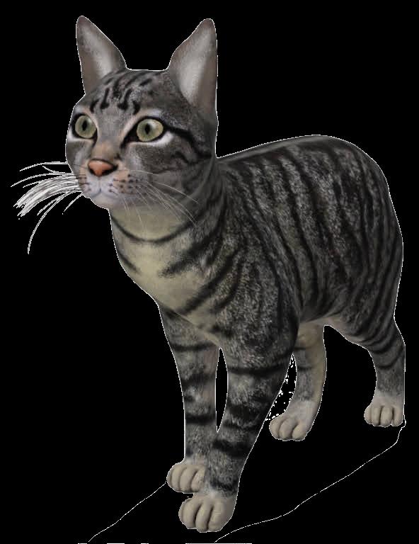 cat-google-3d.png