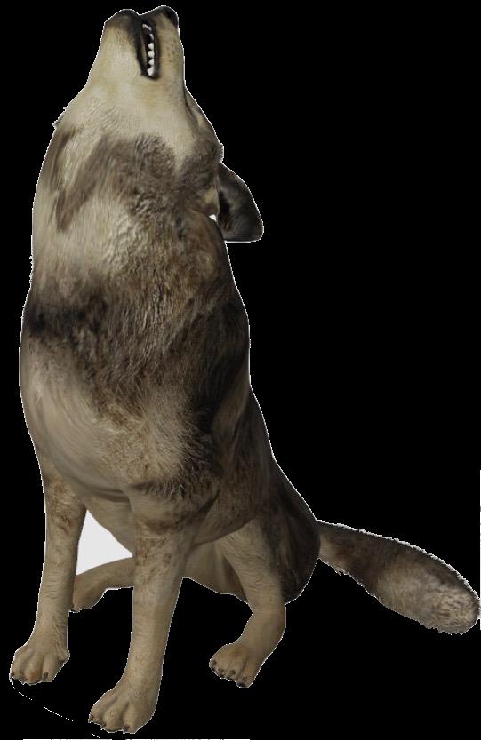 wolf-google-3d.png