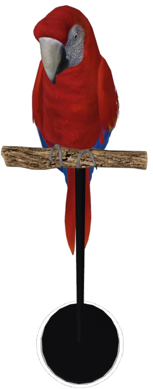macaw-google-3d.png