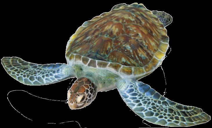 turtle-google-3d.png