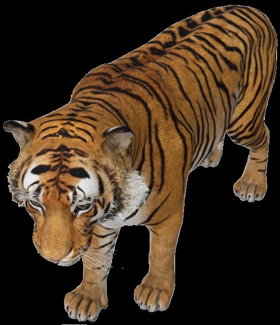 tiger-google-3d.png
