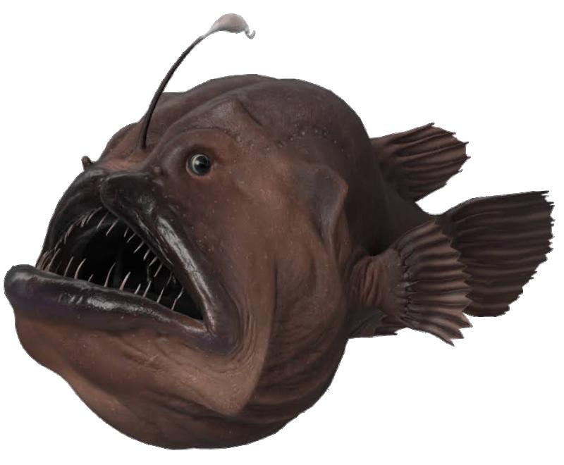 angler-fish-google-3d.png