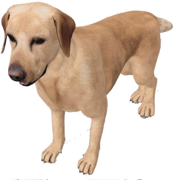 labradorretriever-google-3d.png