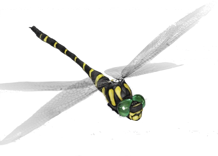 dragonfly-google-3d_0.png
