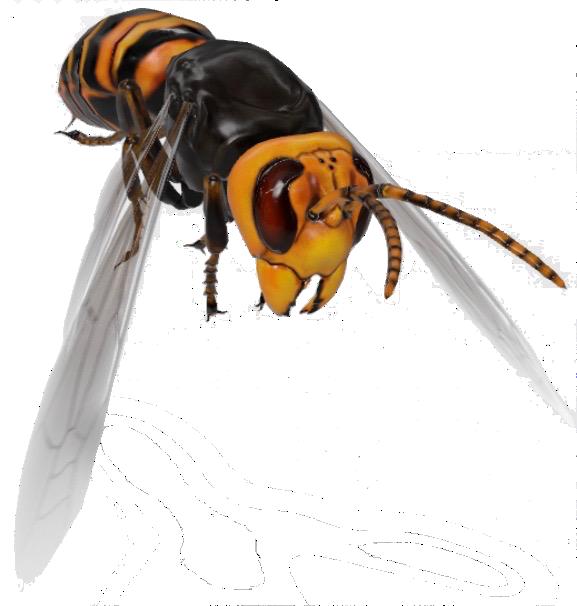 hornet-google-3d_0.png