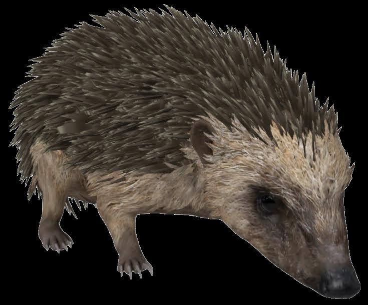 hedgehog-google-3d.png