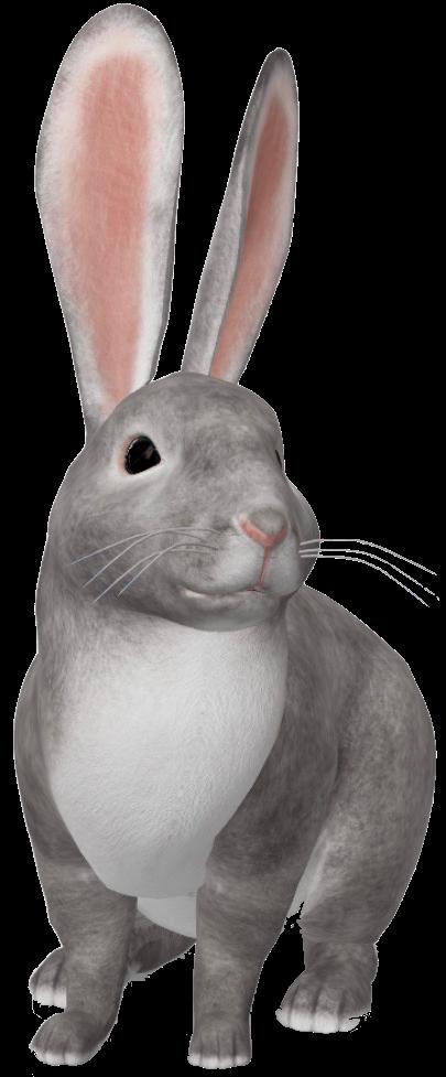 bunny-google-3d.png