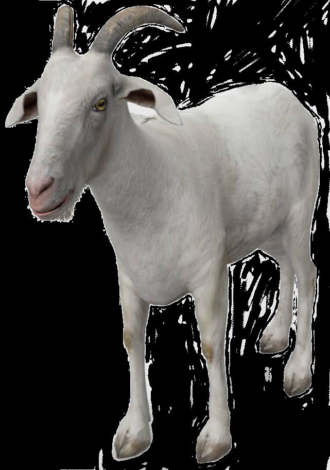 goat-google-3d.png