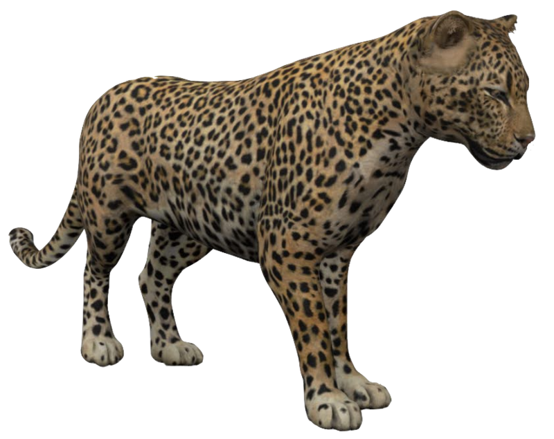 leopard-google-3d.png