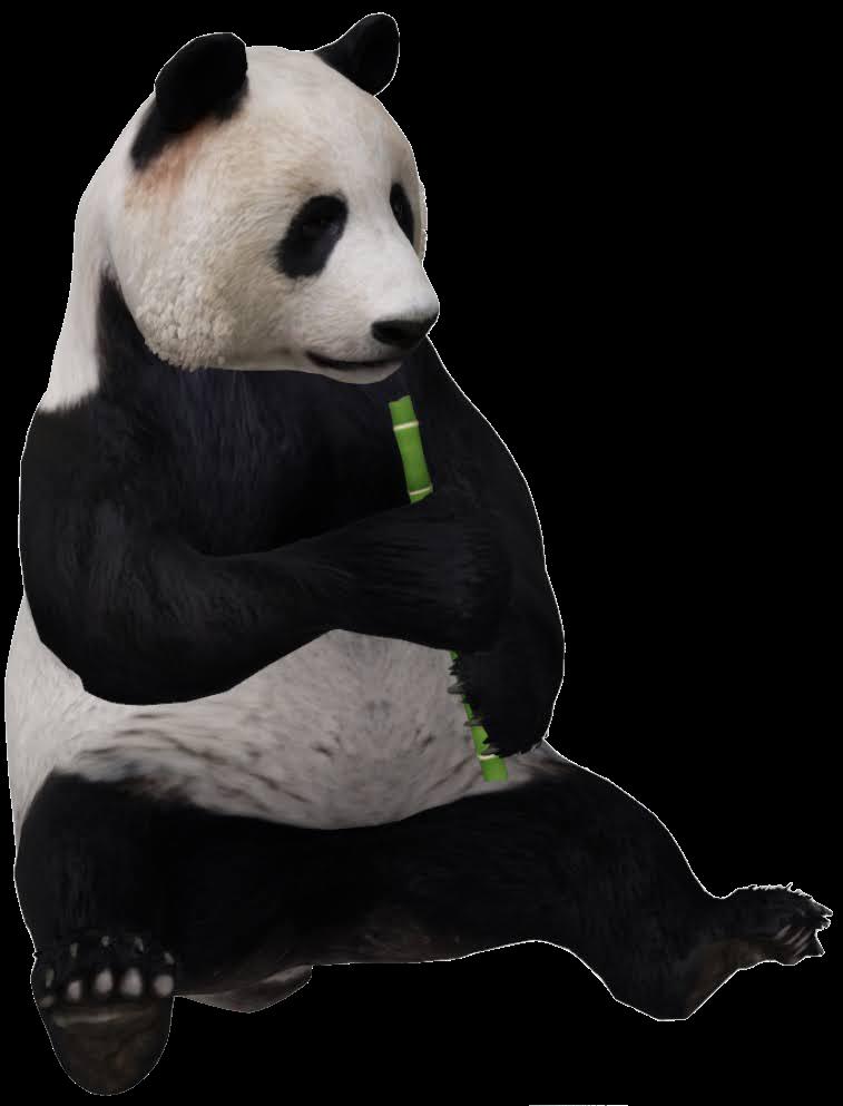 giant-panda-google-3d.png