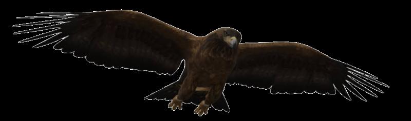 eagle-google-3d.png