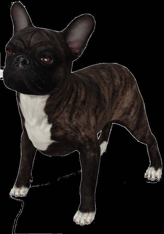 french-bulldog-google-3d.png