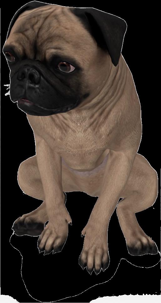 pug-google-3d.png