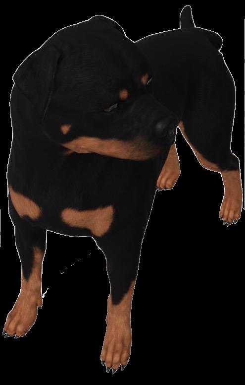 rottweiler-google-3d.png