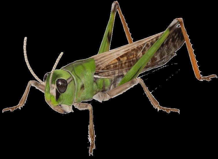 grasshopper-google-3d.png