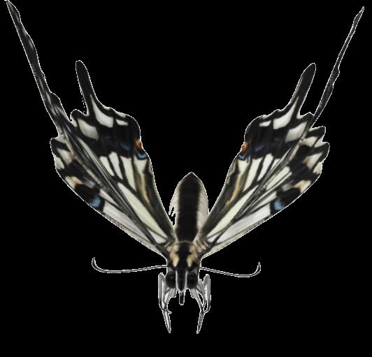 swallowtail-butterfly-google-3d.png
