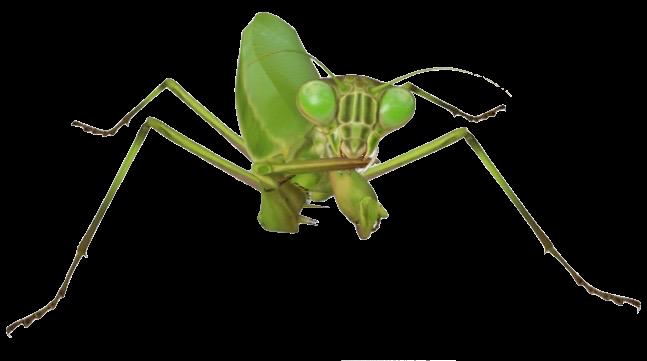 mantis-google-3d.png