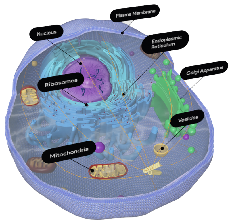 animal-cell-google-3d.png