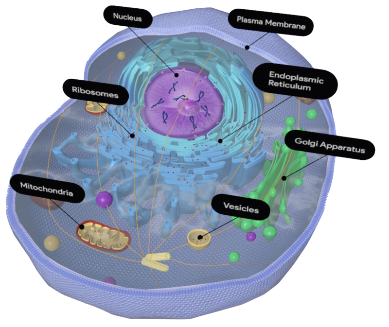 eukaryote-google-3d.png