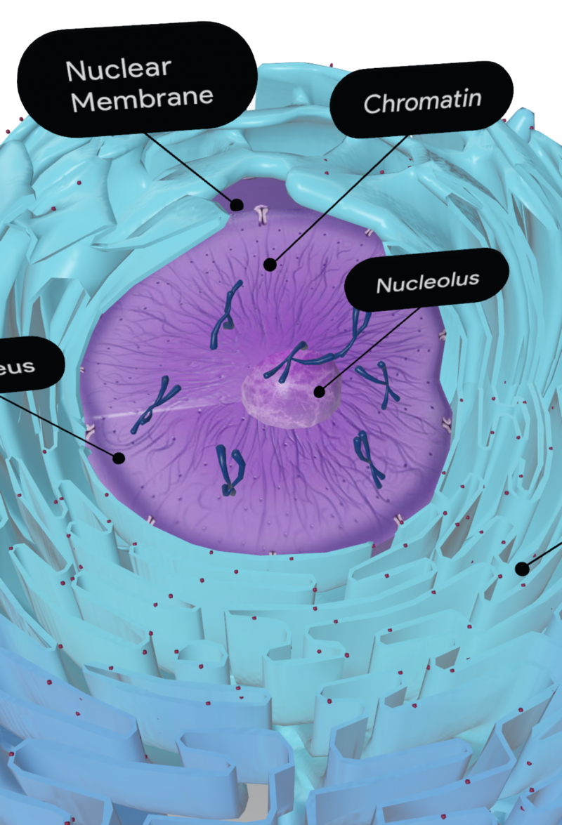 nuclear-membrane.png