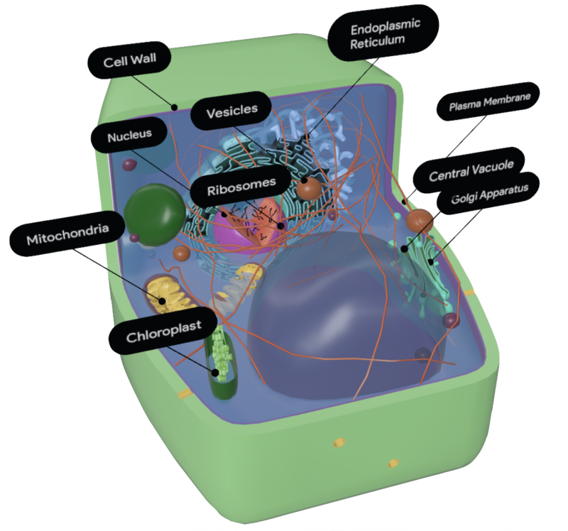 plant-cell-google-3d.png