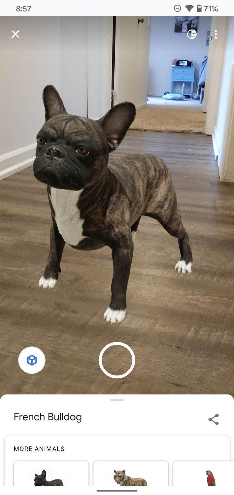 google-3d-animal-how-to-12.jpg