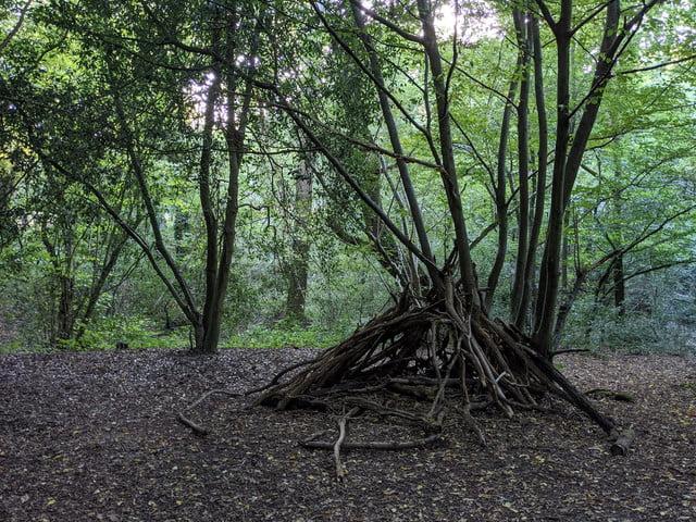 google pixel 4a review woods